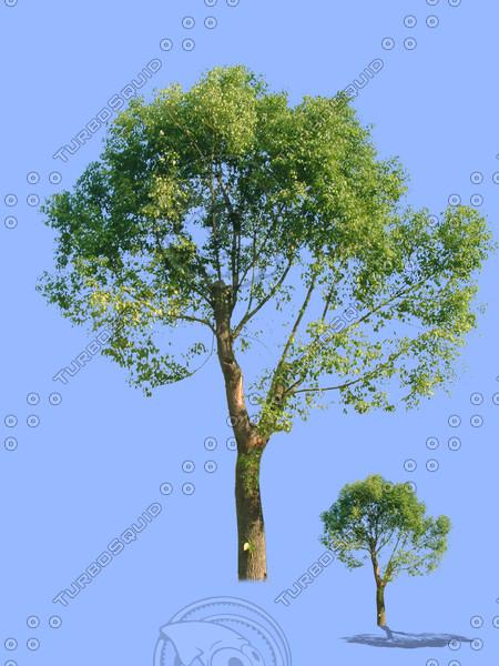 tree-54.psd