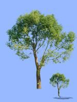 tree-54