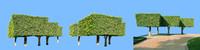 tree-66