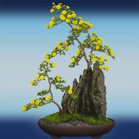 Hi Res Bonsai Tree 03