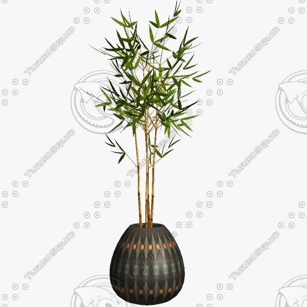 Bamboo_C.jpg