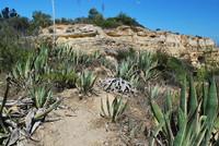 Landscape_Algarve_0006