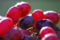 Fruit_Grape_0001