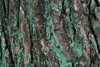 Bark_Free Sample