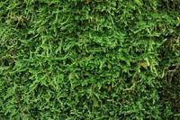 Moss_Texture Pack (3)