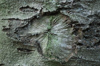 Bark_Texture_0002