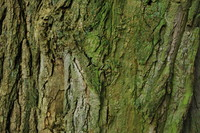 Bark_Texture Pack_0006