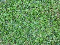 Grass 12