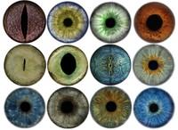 Iris Textures