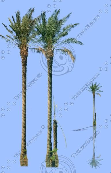 tree-08.jpg