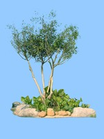 tree-18