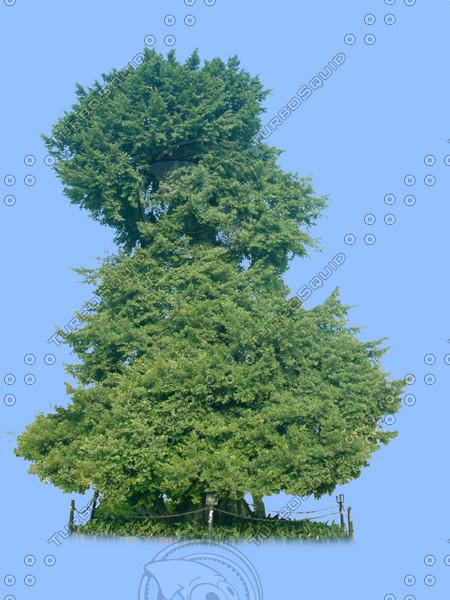 tree-21.psd