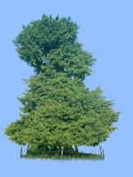 tree-21