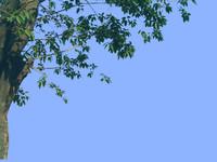 tree-33