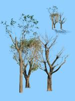 tree-35