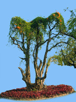 tree-36