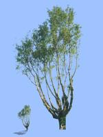 tree-44