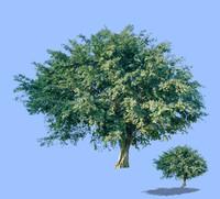 tree-49