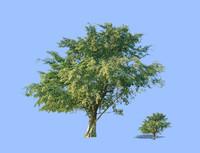 tree-50