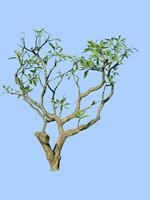 tree-56
