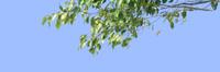 tree-62