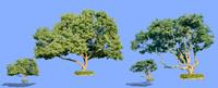 tree-65