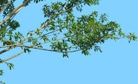 tree-68