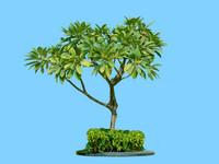 tree-69