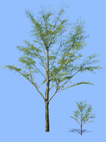 tree-71