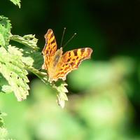 Butterfly Macro 2