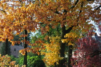 Autumn Gold_0003