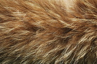 Fur_Texture_0004