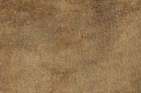 Leather_Texture_0006