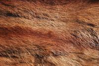 Fur_Texture_0006