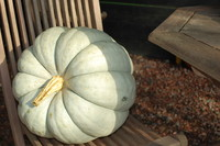 Pumpkin_0002