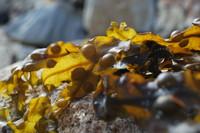 Seaweed_0001