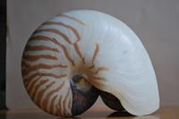 Nautilus Shell_0004