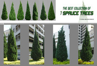 7 Spruce Trees