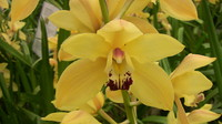 Flowers_Orchid_0004