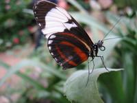 Butterfly_0001
