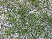 Pebbles with Grass & Weeds
