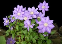 Flower Edge