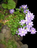 Flower Edge 2