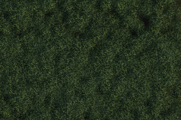 how to add grass on c4d