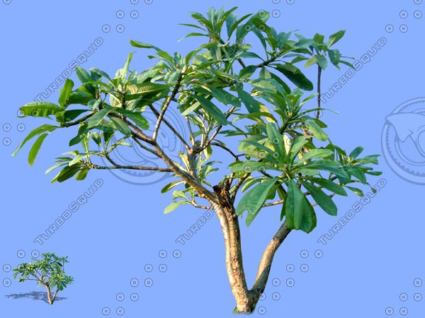 tree-29.psd