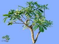 tree-29