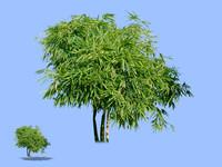 tree-46