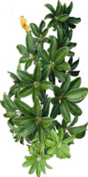 Tropic Plant