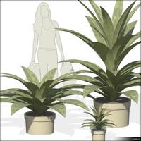 Plant 01126se