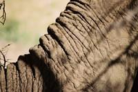 Wildlife_Elephant Trunk